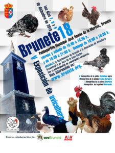 Brunete 2018 - V Exposición de Avicultura @ Polideportivo Municipal José Ramón de la Morena, Brunete | Brunete | Comunidad de Madrid | España